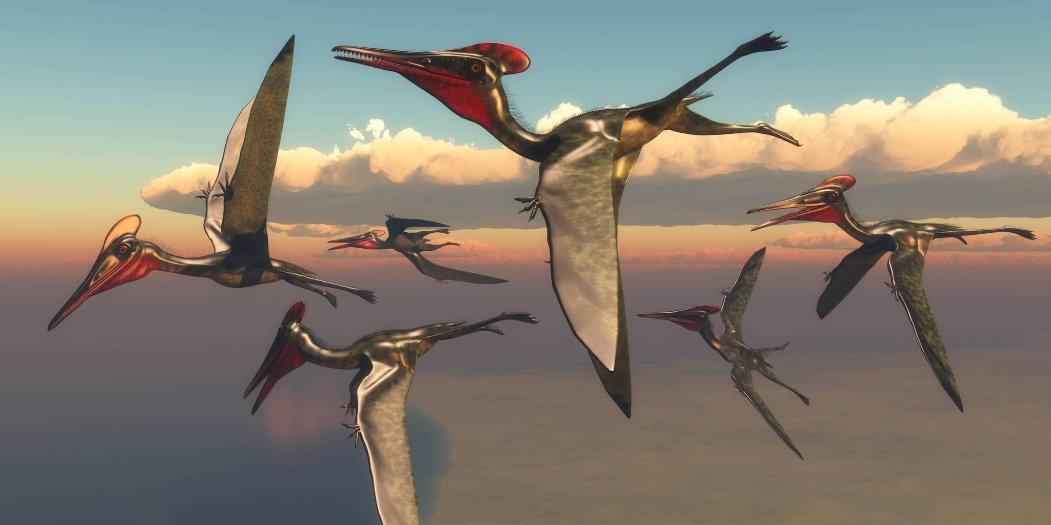 Les dinosaures volants